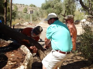 Mike, Steve and Frank hard at work crushing olives at the Olive Press!
